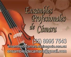 violines para ceremonias y banquetes